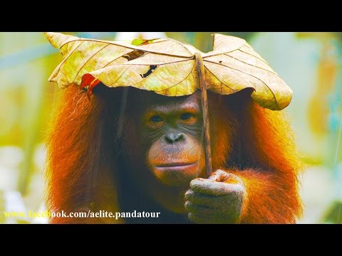 Rain Sounds for Meditation #Relaxing White noise #Whitenoise sound #rain rain for sleep музыка дождя