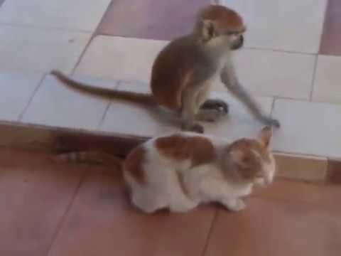Cat loving monkey