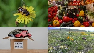 Asthma Preventing Microbes, Pollinator Plant Preference, and More: 60 Second Science Podcasts
