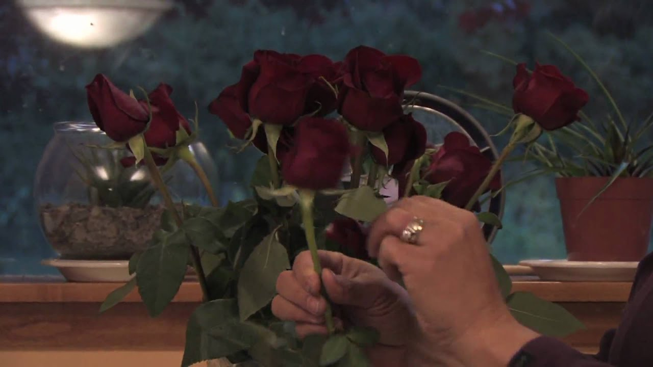 Gardening tips how to keep a dozen red roses fresh youtube gardening tips how to keep a dozen red roses fresh reviewsmspy
