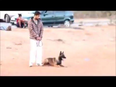 Dressage des chiens au maroc (kenitra) - YouTube