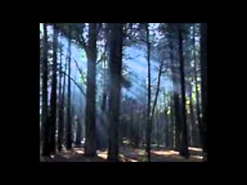 The Trees of the Field Karaoke (Words/Chords)