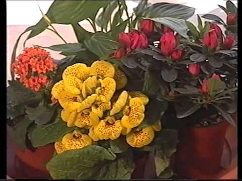 Acquagenius gf sistema irrigazione piante da appartamento for Irrigazione piante