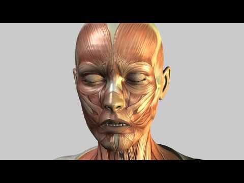 Dr. Mustafa KarataşLilith  Virtual Patient  Face Muscles
