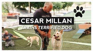CESAR MILLAN TRAINS MY TERRIFIED DOG ARA |  VLOG | RRAYYME