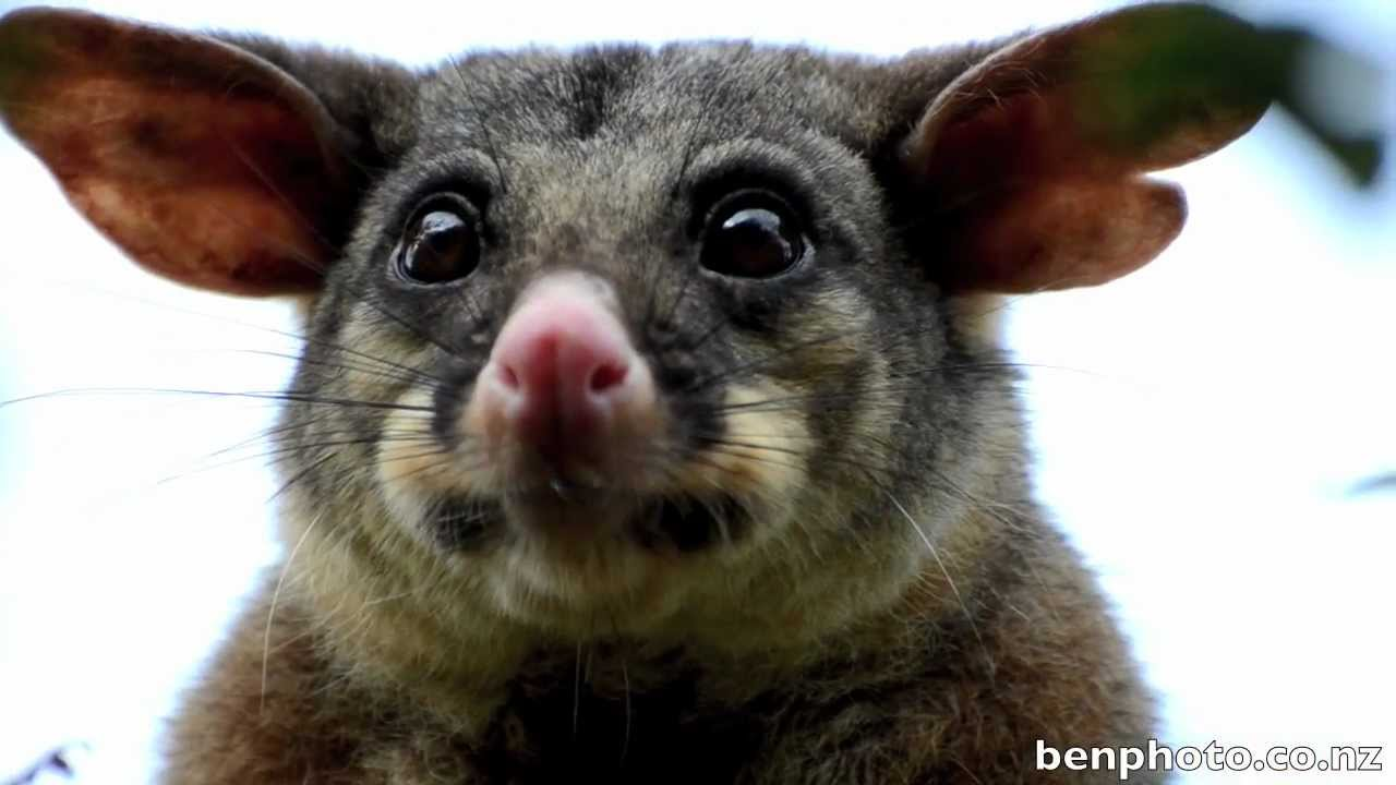 10 Insanely Freaky Animal Sounds