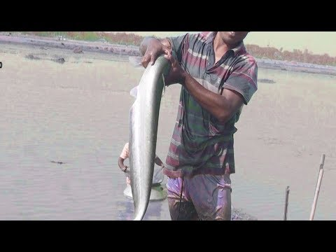 Awesome Fishing from the village bill | Chital fish and booze | village people