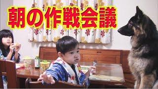 秋田犬 惣右介 ジャーマンシェパード犬マック 9月前半でも寒い朝、孫の...