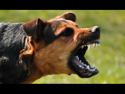 Thumbnail: A Navy SEAL explains what to do if you're attacked by a dog