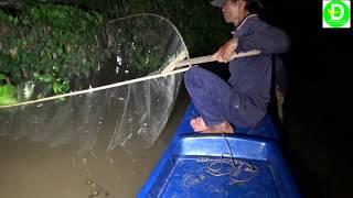 Xúc cá mè vinh đầu mùa l Fishing