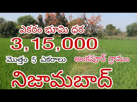 Download 5 Acres Agriculture Land For Sale In #Nizamabad District    #Ankapur village   #Telangana