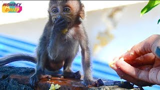 New update Heidi & good news info baby eat banana too many & get better & better | Monkey Daily 2094
