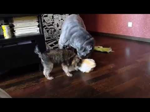 видео: Собачья жестокость. Не для слабонервных.