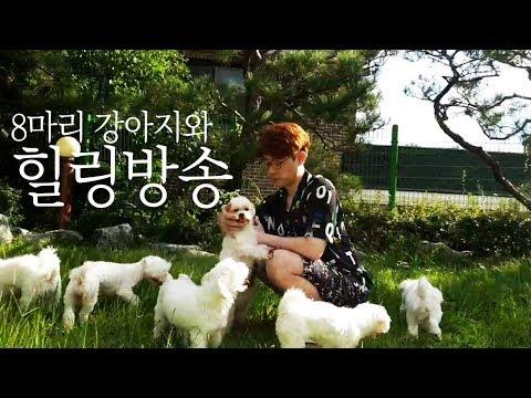 [만만] 만만 힐링방송 추석연휴 8마리 강아지와함께 행복한 하루