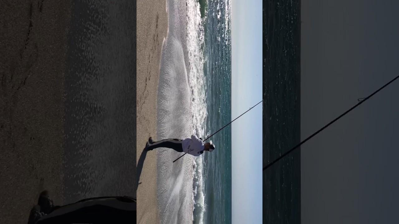 Sargo a surfcasting con temporal