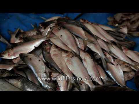 Bangalore Fish Market: Fresh Fruit Of The Sea