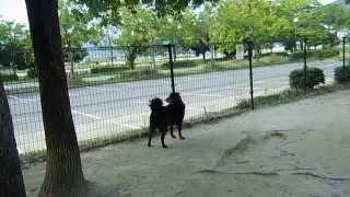2011年成犬で福岡市動物愛護管理センターより譲渡してもらった元野...