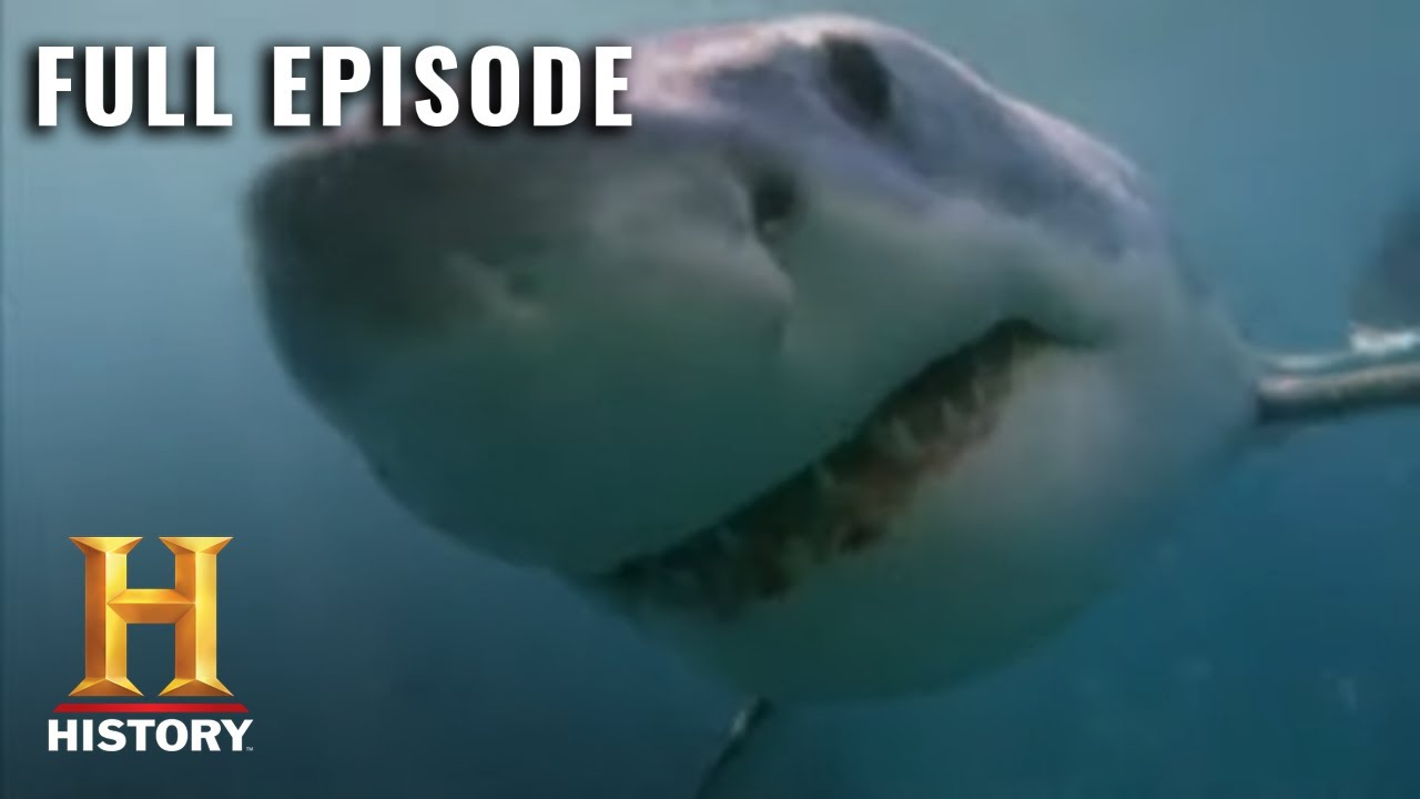 Get ready for Shark Week 2020 on Discovery: How to watch, full ...