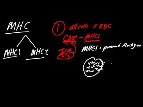 MHC Made Simple!  Also HLA Disease Coorelations
