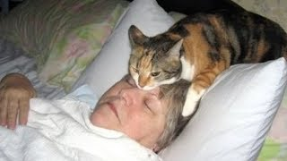 If you HAVE PETS, you DON'T NEED ALARM CLOCK! - The FUNNIEST ANIMAL VIDEOS