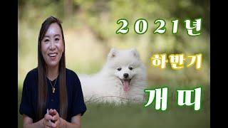 2021년 10월11월12월 개띠 나이별 운세!(28세,40세,52세,64세)