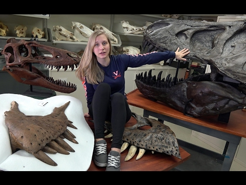 Dissecting with Emily - Tyrannosaurus rex holotype - Maxillary Mysteries