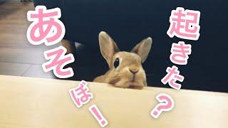 なかなか起きないお父さんの様子をみに来るウサギが可愛い #251 thumbnail