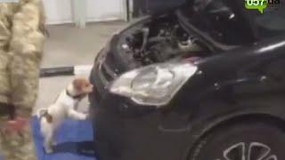 На границе с Россией служебная собака унюхала наркотики и оружие в машине