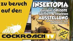 zu Besuch: Insektopia Erfurt | CockroachTV