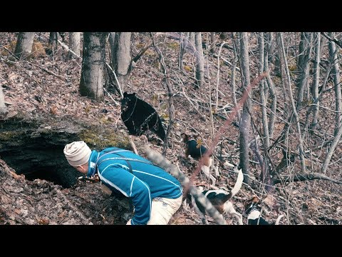 THE DOGS GO DEEP IN A MINE – Bear Hunting