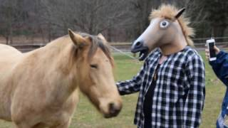 How horses react to a kid in a horse mask.