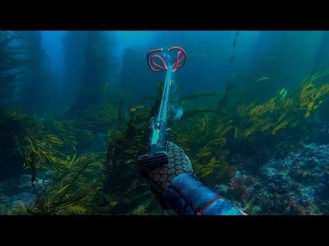 Spearfishing Lawrence Rocks Portland Victoria