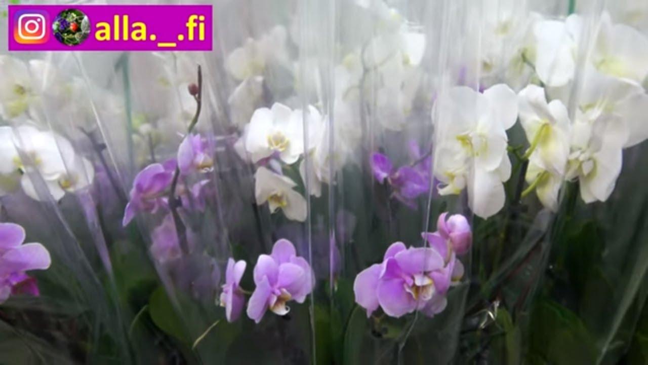 Обзор. Комнатные цветы в магазине.