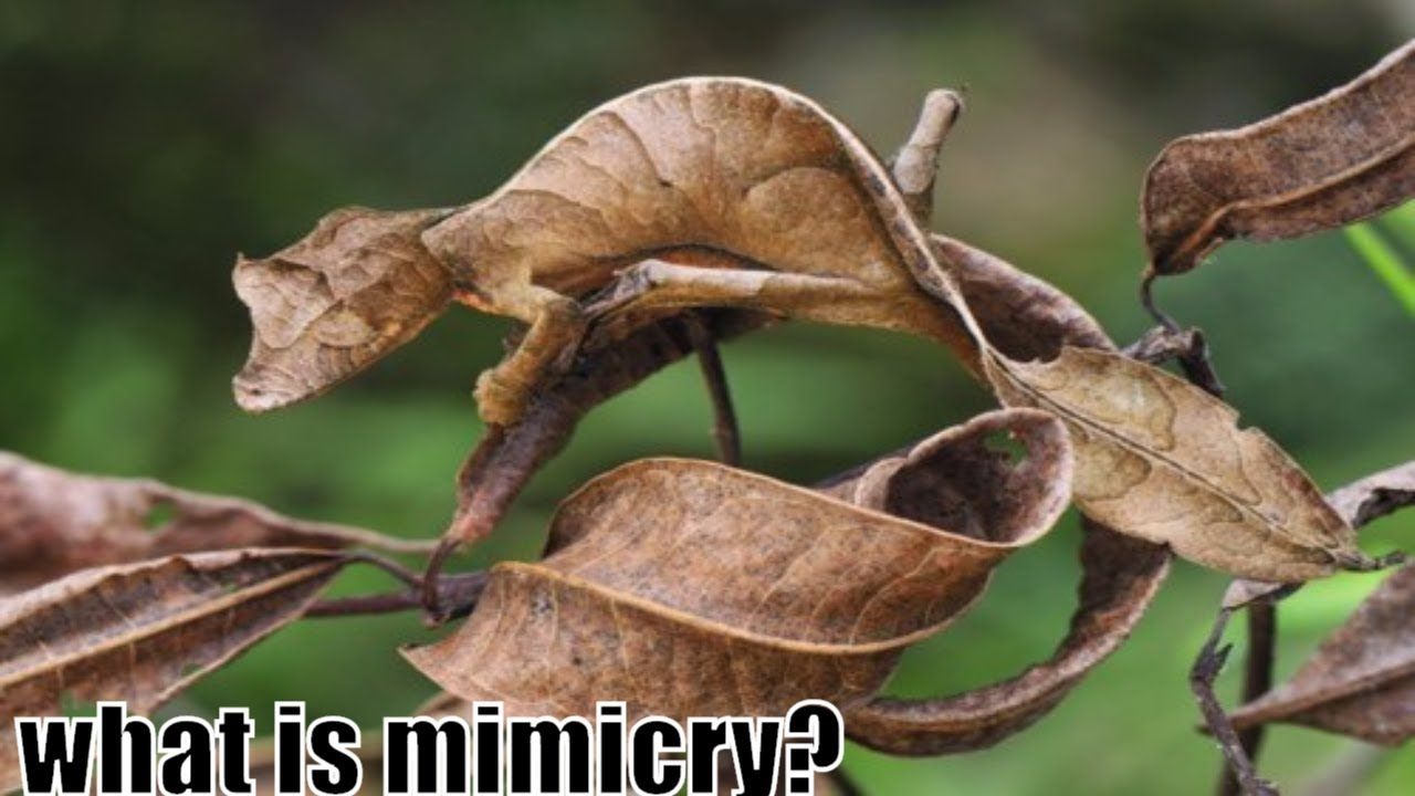 Image result for animal mimicry