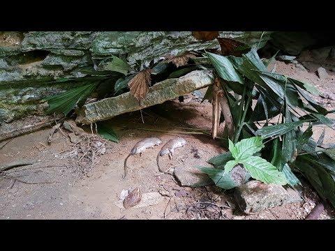 Primitive Skills: Mouse Trap Stone | Primitive Traps