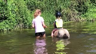 First Shetland Pony Swim Of The Summer: TV Episode 239