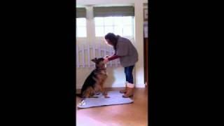 Dog Training 101: Dog Tricks: Catching Treat Off Nose- Step 1
