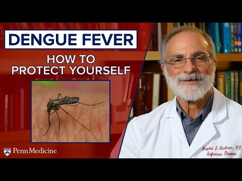 Dengue Fever And Mosquitos: How To Protect Yourself