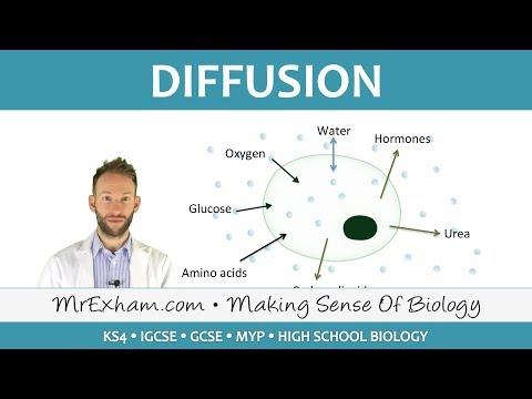 Diffusion - GCSE Biology