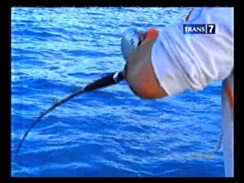 Mancing Mania Jelajah Spot Laut Sulawesi Part 3