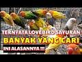 Lovebird Sayuran Ternyata Masih Banyak Yang Cari Ini Penjelasan Dan Alasannya  Mp3 - Mp4 Download