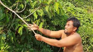 Primitive Technology -eating coconut see crab     - take to cook   eating delicious