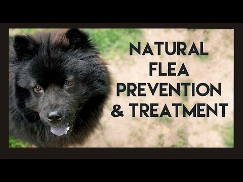 Natural Flea Prevention and Treatment