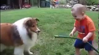 play with Horse baby and dog  MP4 Best Funny Video