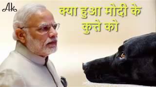 PM नरेंद्र मोदी की रक्षा करने वाले इस कुत्ते को हुई गंभीर बीमारी, अस्पताल में हुआ भर्ती.....