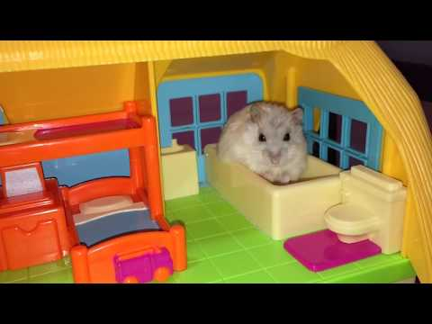 Happy Hamsters & their Apartment Life!