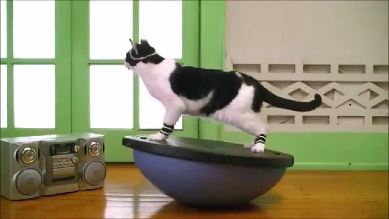 pussy cats work out incarnate characteristics