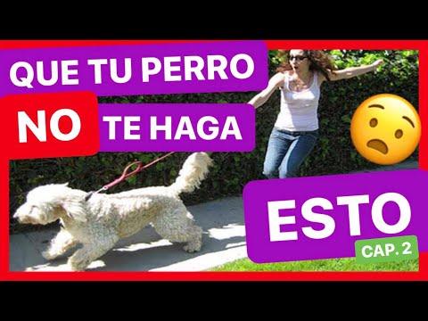 Enséñale a tu perro a no tirar de la correa 2º Parte