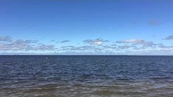 30 seconds of outdoor therapy at Emerson Point Preserve in Palmetto, Florida