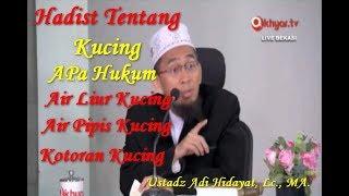 Apa Hukum Air Liur Kucing, Air Kencing Kucing, Kotoran Kucing Ustadz Adi Hidayat, Lc., MA.